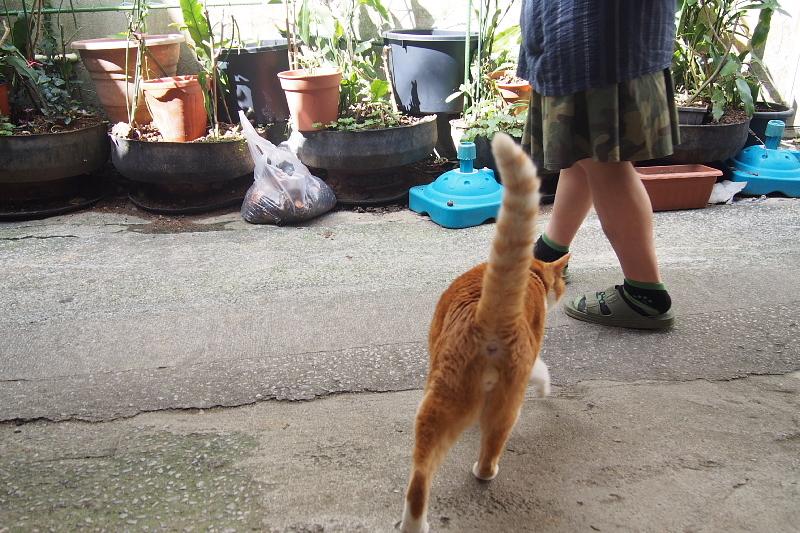 【沖縄で一番有名な猫店長】みーちゃんがいる嘉数商会@那覇_b0008655_14202132.jpg