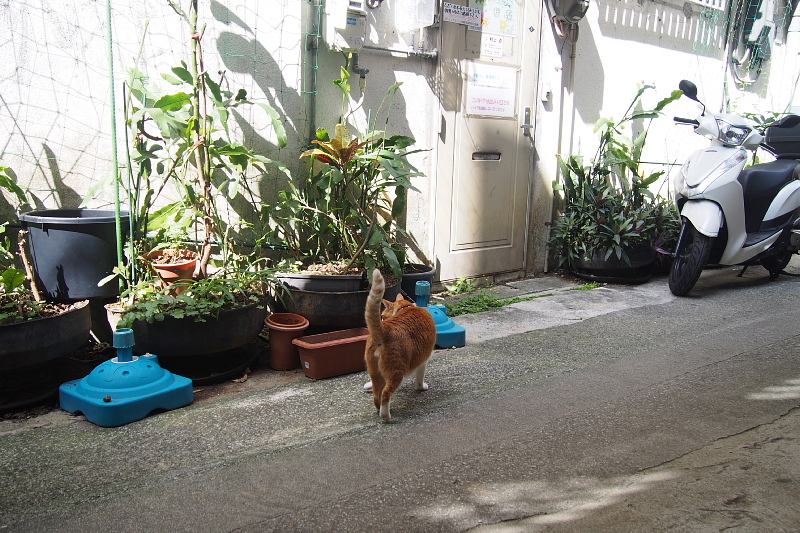 【沖縄で一番有名な猫店長】みーちゃんがいる嘉数商会@那覇_b0008655_14203502.jpg