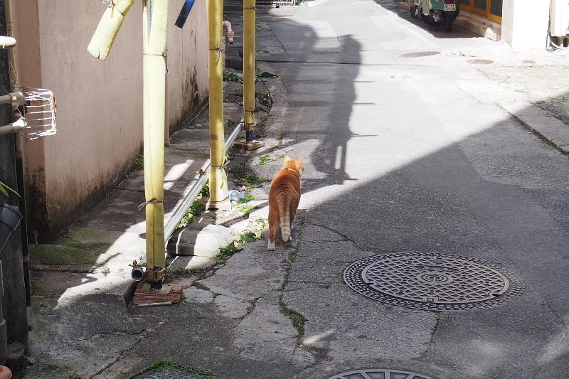 【沖縄で一番有名な猫店長】みーちゃんがいる嘉数商会@那覇_b0008655_14212543.jpg