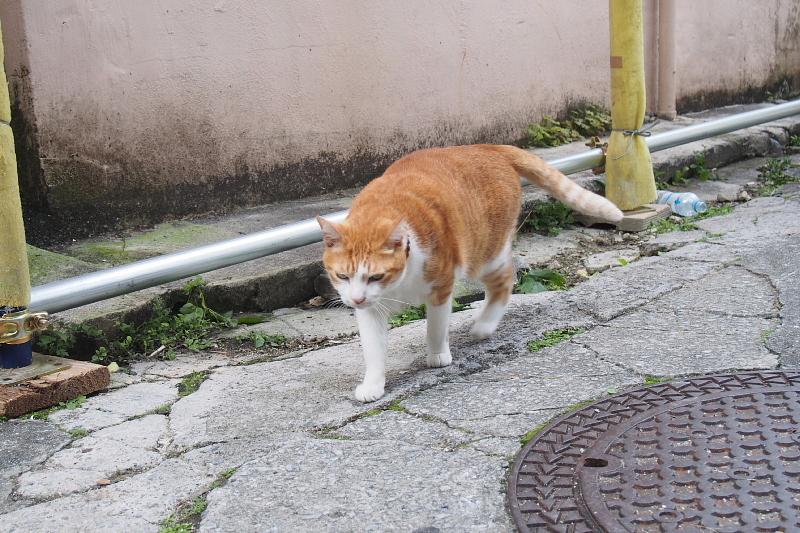 【沖縄で一番有名な猫店長】みーちゃんがいる嘉数商会@那覇_b0008655_14213948.jpg