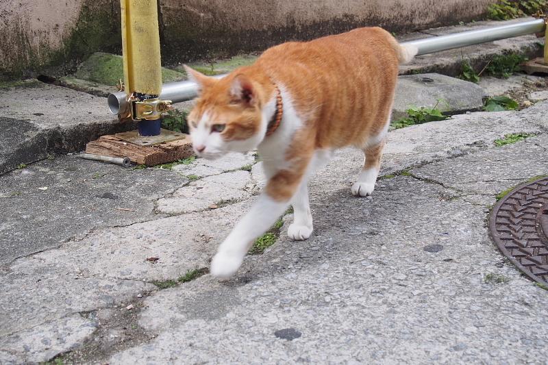 【沖縄で一番有名な猫店長】みーちゃんがいる嘉数商会@那覇_b0008655_14215018.jpg