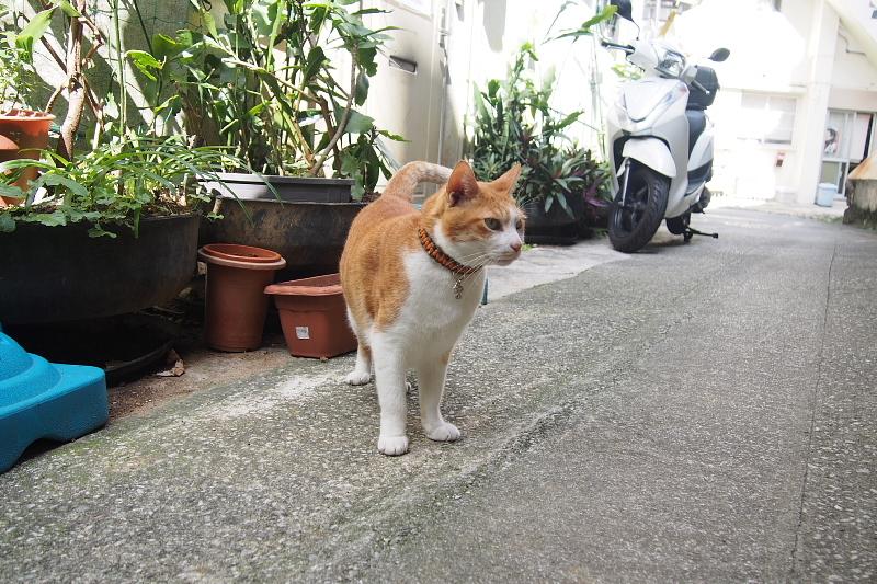 【沖縄で一番有名な猫店長】みーちゃんがいる嘉数商会@那覇_b0008655_14222650.jpg
