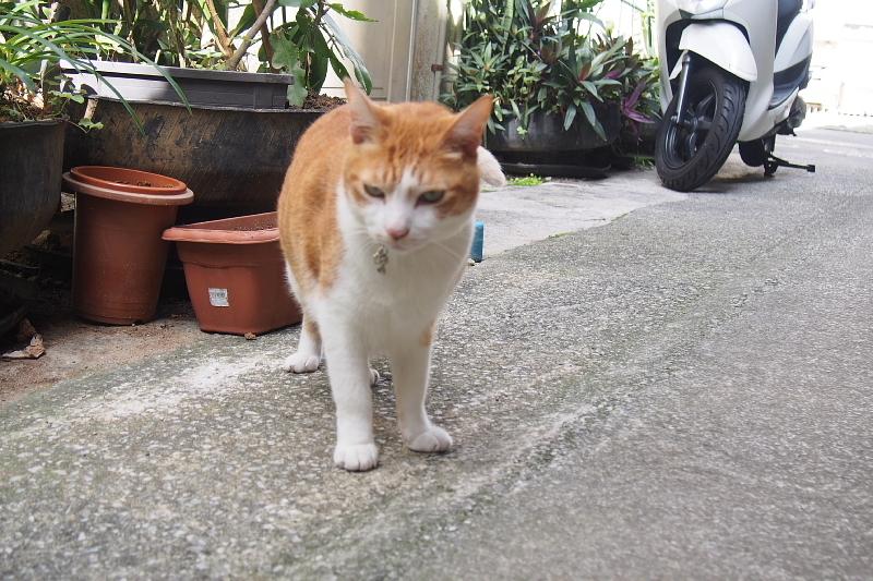 【沖縄で一番有名な猫店長】みーちゃんがいる嘉数商会@那覇_b0008655_14223777.jpg