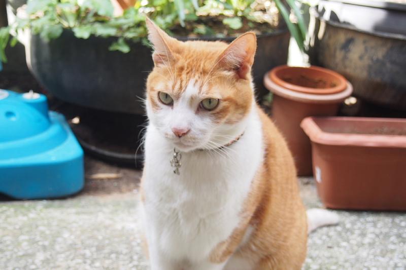【沖縄で一番有名な猫店長】みーちゃんがいる嘉数商会@那覇_b0008655_14224285.jpg