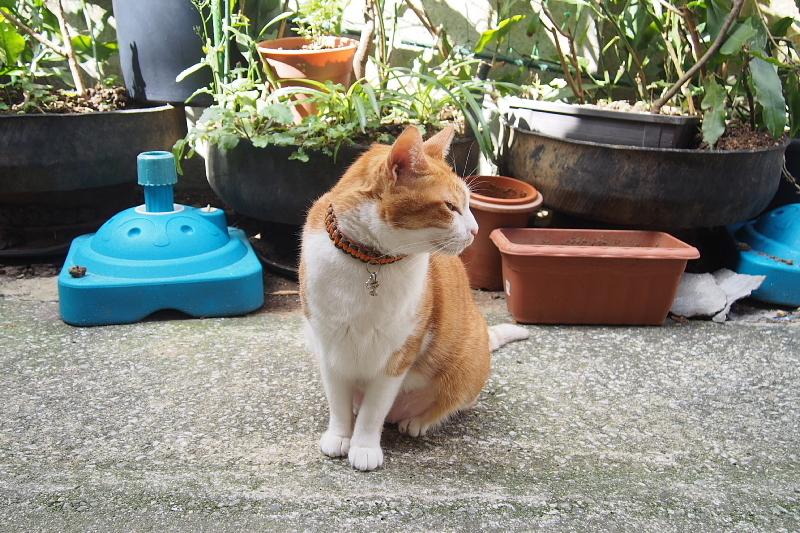 【沖縄で一番有名な猫店長】みーちゃんがいる嘉数商会@那覇_b0008655_14225932.jpg