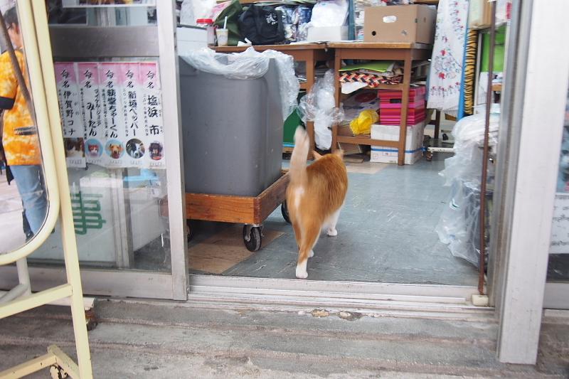 【沖縄で一番有名な猫店長】みーちゃんがいる嘉数商会@那覇_b0008655_14233941.jpg