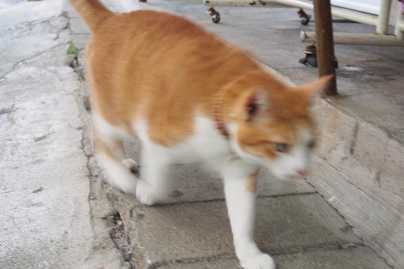 【沖縄で一番有名な猫店長】みーちゃんがいる嘉数商会@那覇_b0008655_14235011.jpg