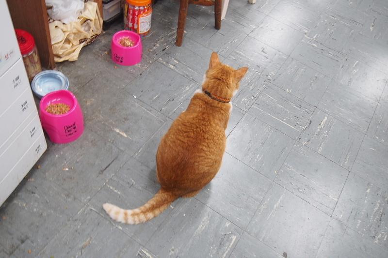 【沖縄で一番有名な猫店長】みーちゃんがいる嘉数商会@那覇_b0008655_14242758.jpg