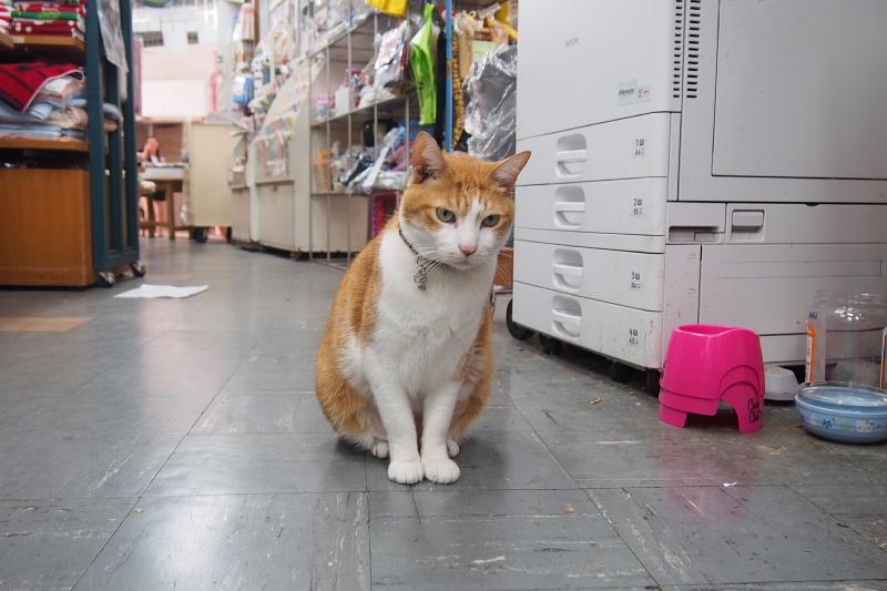 【沖縄で一番有名な猫店長】みーちゃんがいる嘉数商会@那覇_b0008655_14243736.jpg