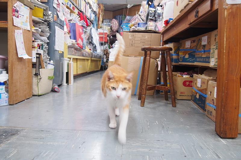 【沖縄で一番有名な猫店長】みーちゃんがいる嘉数商会@那覇_b0008655_14244238.jpg