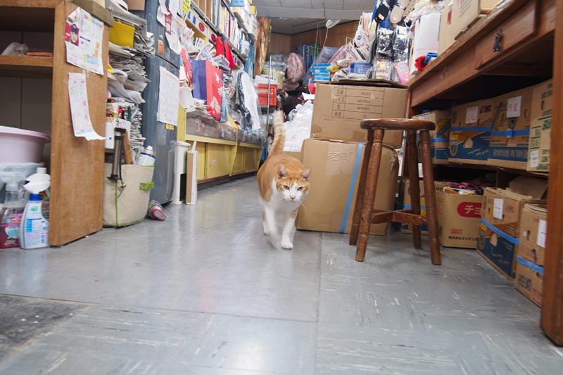 【沖縄で一番有名な猫店長】みーちゃんがいる嘉数商会@那覇_b0008655_14252869.jpg