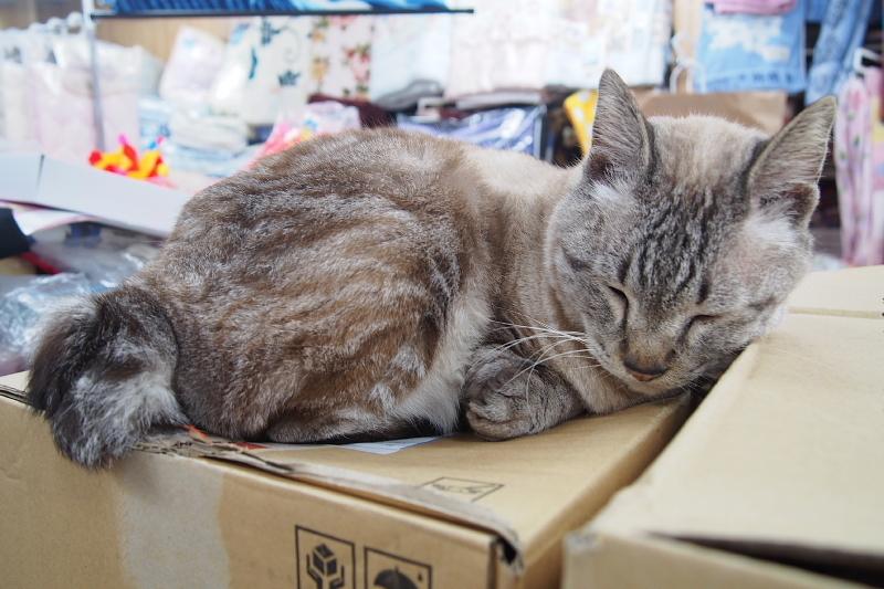 【沖縄で一番有名な猫店長】みーちゃんがいる嘉数商会@那覇_b0008655_14263283.jpg