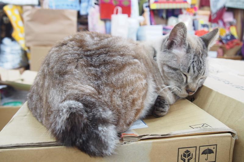 【沖縄で一番有名な猫店長】みーちゃんがいる嘉数商会@那覇_b0008655_14263736.jpg