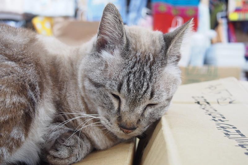 【沖縄で一番有名な猫店長】みーちゃんがいる嘉数商会@那覇_b0008655_14264105.jpg