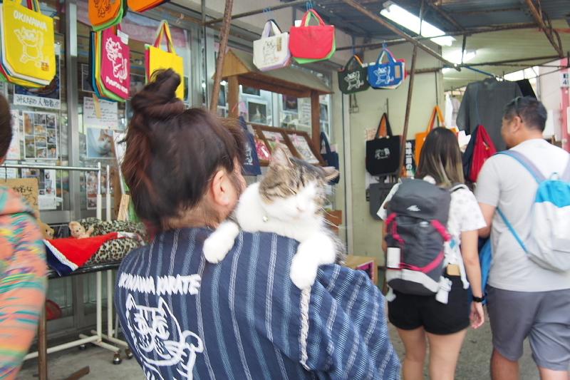 【沖縄で一番有名な猫店長】みーちゃんがいる嘉数商会@那覇_b0008655_14271841.jpg