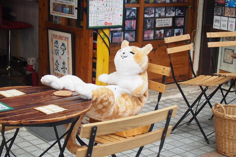 【沖縄で一番有名な猫店長】みーちゃんがいる嘉数商会@那覇_b0008655_14312782.jpg