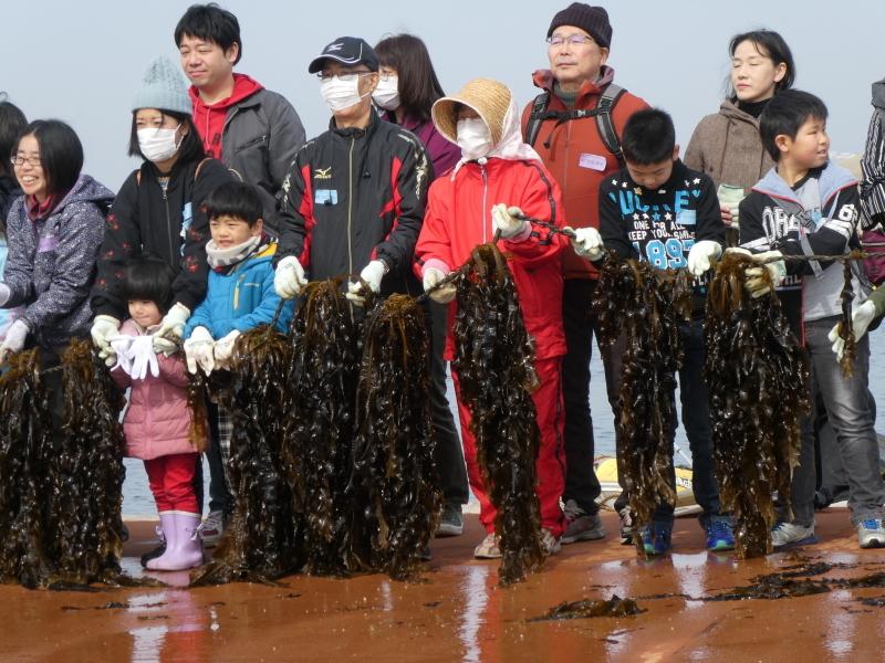 『みんなで一緒にワカメを育てよう:収獲祭り』・・・(せんなん里海公園:「しおさい楽習館」&「さとうみ磯浜」)_c0108460_20505471.jpg