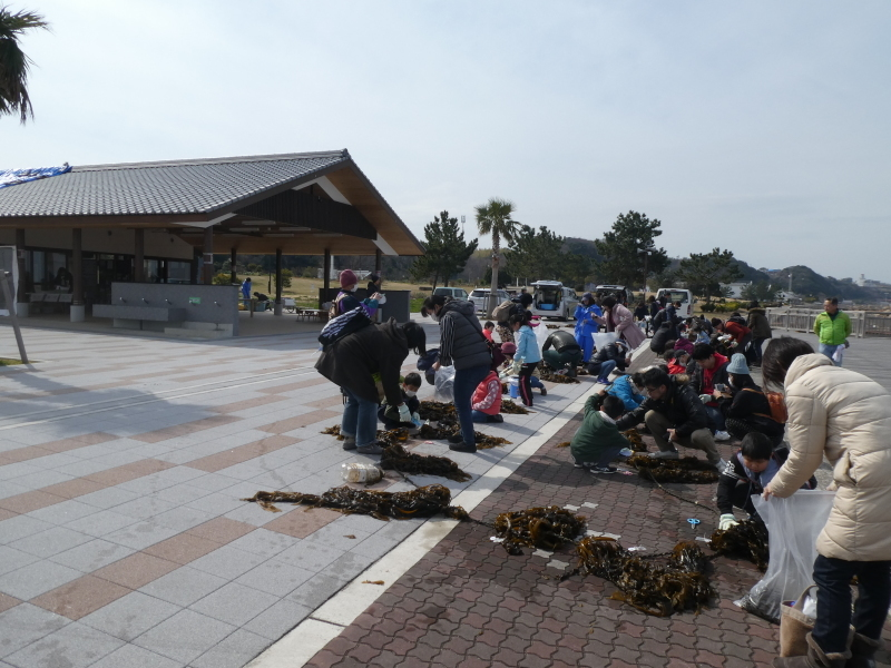 『みんなで一緒にワカメを育てよう:収獲祭り』・・・(せんなん里海公園:「しおさい楽習館」&「さとうみ磯浜」)_c0108460_20523688.jpg