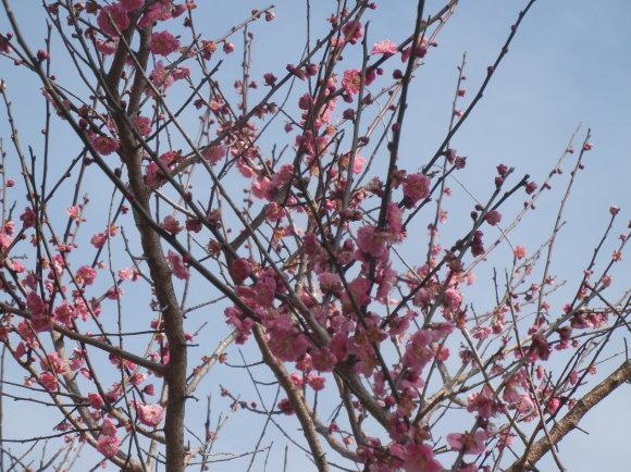 '19,2,24(日)春になると大忙し!_f0060461_11403966.jpg