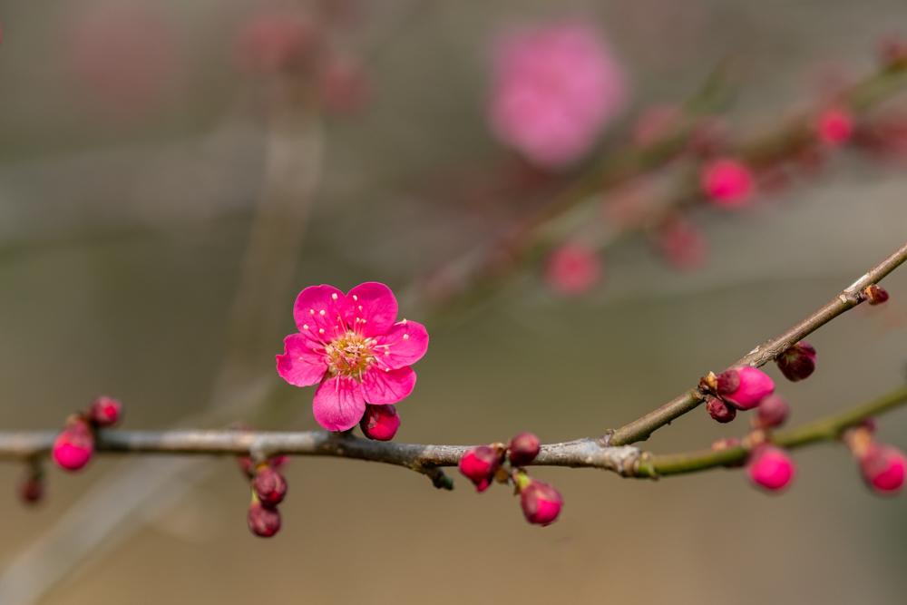 梅がキレイ_a0261169_20531682.jpg