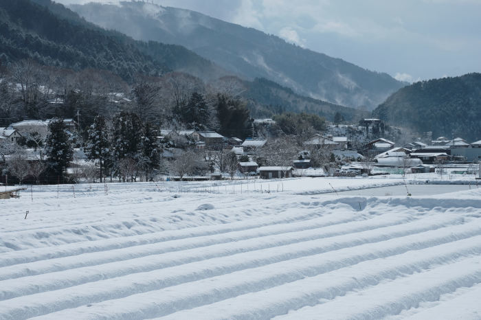 京都 大原雪景色 2019_f0021869_21450836.jpg