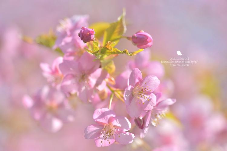 やっと お花びより_c0319774_18580958.jpg