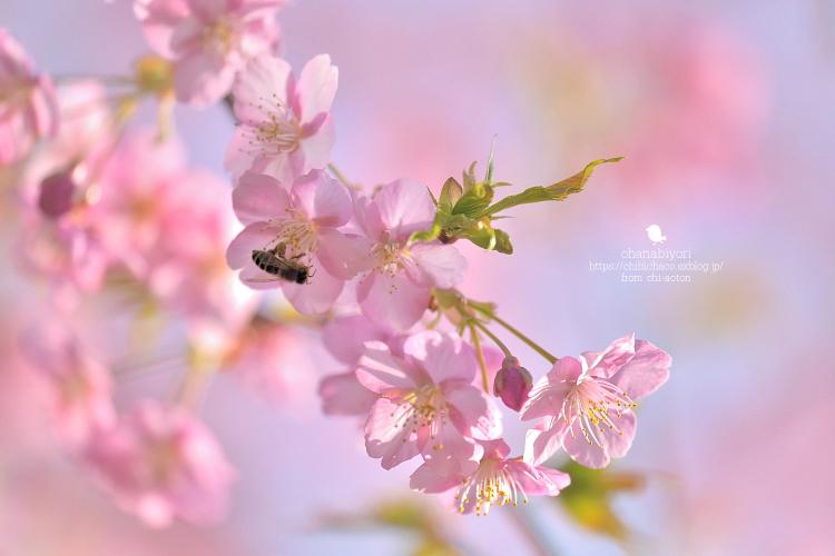 やっと お花びより_c0319774_18582298.jpg