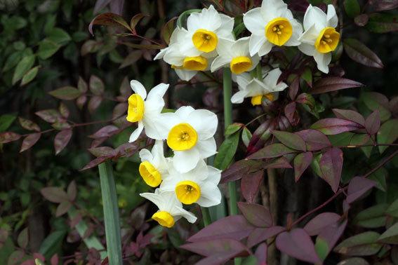 春へのバトンタッチ_b0145296_18121465.jpg