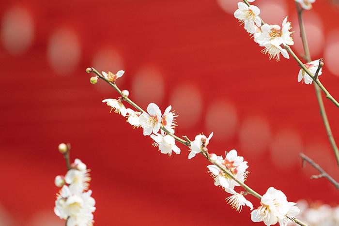 鎌倉梅散歩_b0145398_22124133.jpg