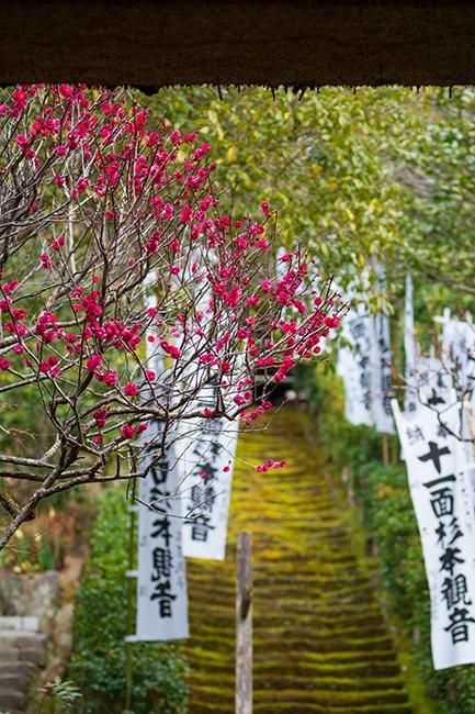 鎌倉梅散歩_b0145398_22240186.jpg