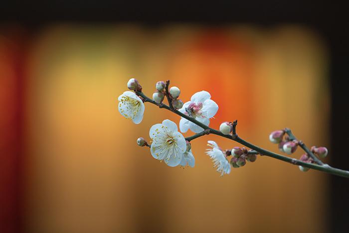 鎌倉梅散歩_b0145398_22283389.jpg