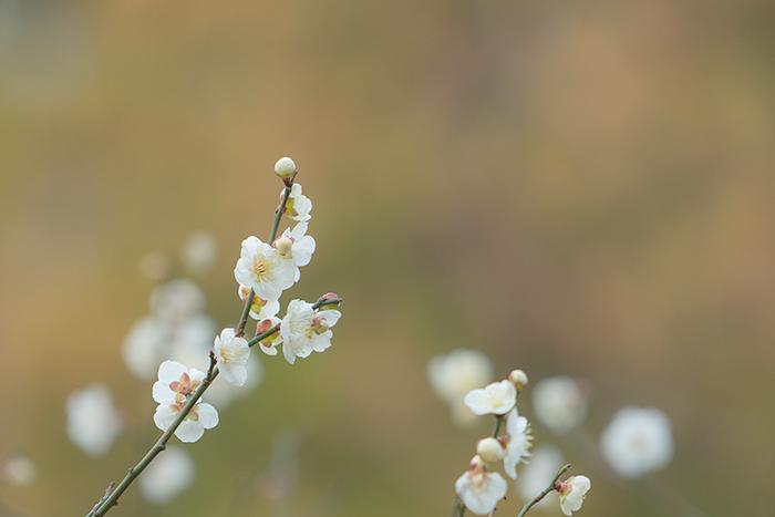 鎌倉梅散歩_b0145398_22320147.jpg