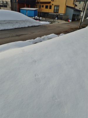 凍み渡り!_c0336902_20261625.jpg