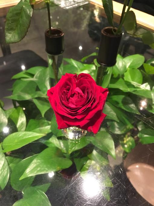 薔薇、バラ、ばら……🌹🌹🌹_c0162404_13583967.jpg