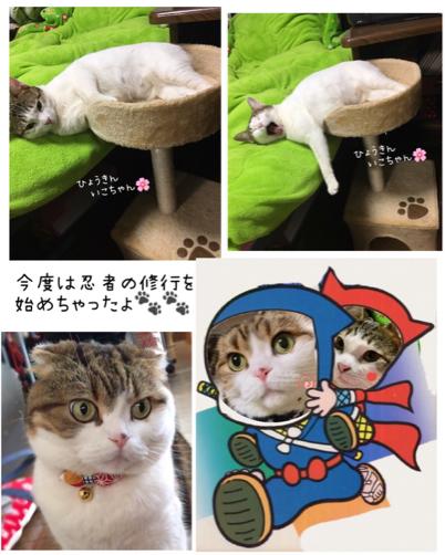 シェンランちゃん ロビンちゃん_f0375804_08592155.jpg