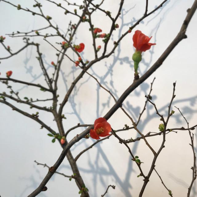 春の便りがすぐそこまで!_c0145608_11382711.jpg