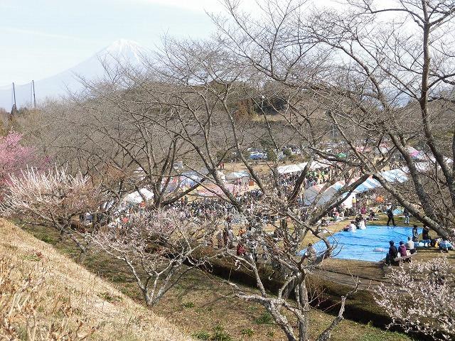 初めて参加し多くの人出に驚いた! 梅が盛りの岩本山公園での「第20回 岩松北地区 梅まつり」_f0141310_07513834.jpg