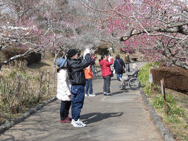 初めて参加し多くの人出に驚いた! 梅が盛りの岩本山公園での「第20回 岩松北地区 梅まつり」_f0141310_07514678.jpg
