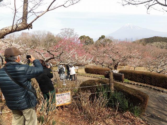 初めて参加し多くの人出に驚いた! 梅が盛りの岩本山公園での「第20回 岩松北地区 梅まつり」_f0141310_07515438.jpg