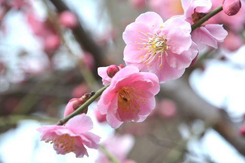 農業文化園・戸田川緑地での演奏ありがとうございました!_f0373339_00240178.jpg