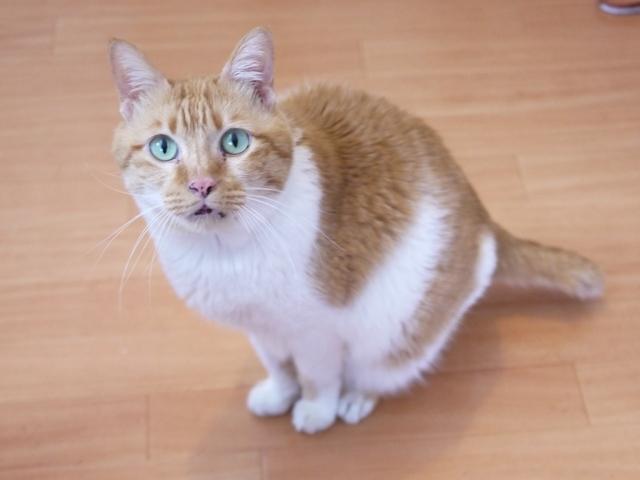 猫のお留守番 喜助くん編。_a0143140_19451087.jpg
