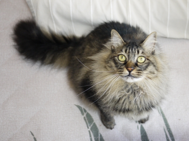 猫のお留守番 諭吉くん編。_a0143140_19505654.jpg