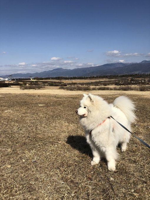 2019年冬 群馬~岐阜~石川県旅行 その1_f0128542_02065584.jpg