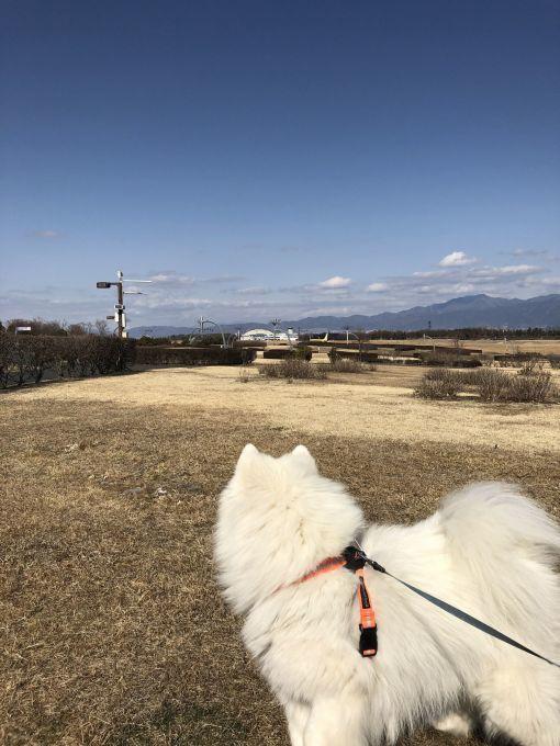 2019年冬 群馬~岐阜~石川県旅行 その1_f0128542_02091403.jpg