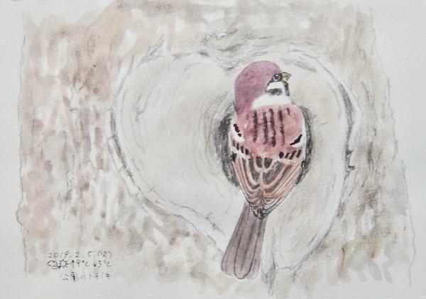 #スズメ 『雀』 Eurasian tree sparrow  #ネイチャー・ジャーナル_a0083553_7532372.jpg
