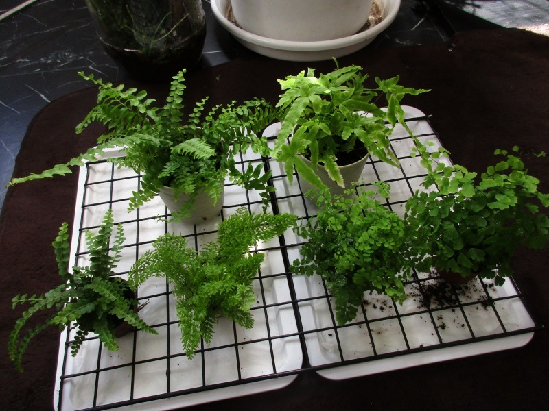 植物「100均の入れ物を活用する」_b0362459_12544851.jpg