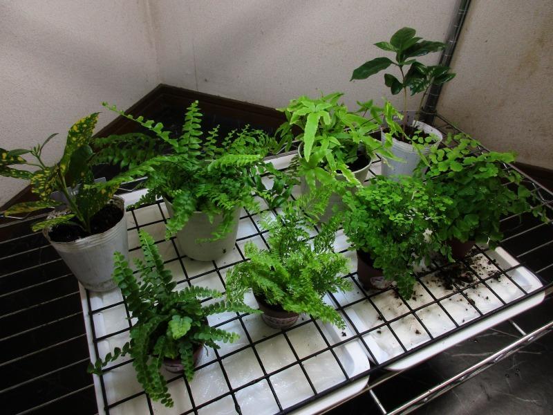 植物「100均の入れ物を活用する」_b0362459_12574261.jpg