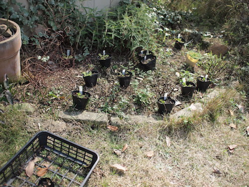 庭で充電_a0335560_21484022.jpg