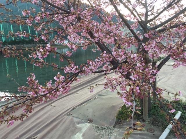 光の春に咲く桜_e0175370_15244147.jpg