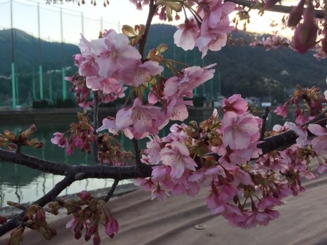 光の春に咲く桜_e0175370_15245390.jpg